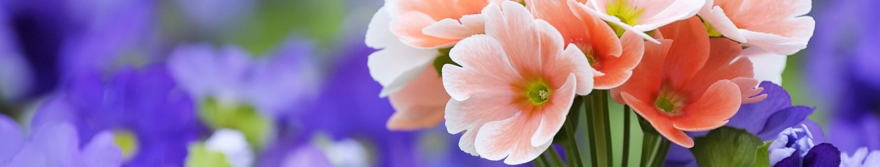 desensibilisation allergie effets secondaires